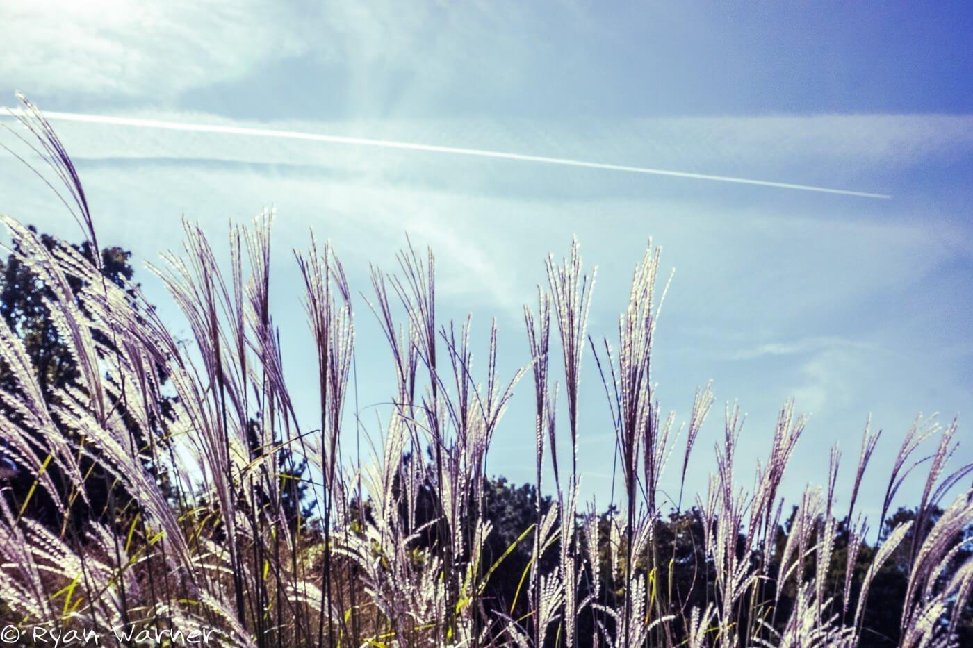 Grass-Euclid Beach-Cleveland, Ohio