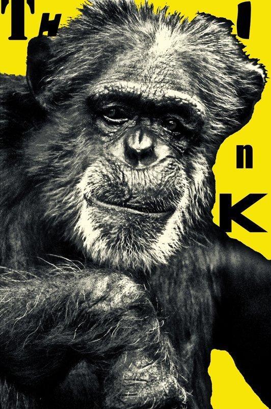 Think Series: Chimps