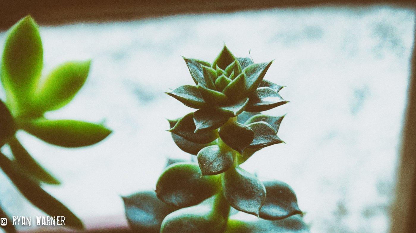 Succulents #2 – Feb 2021