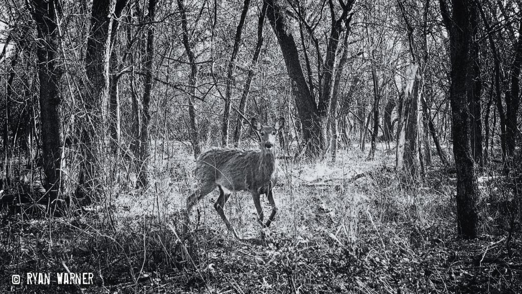 Deer #3 – Clintonville – 2021 – Ryan Warner