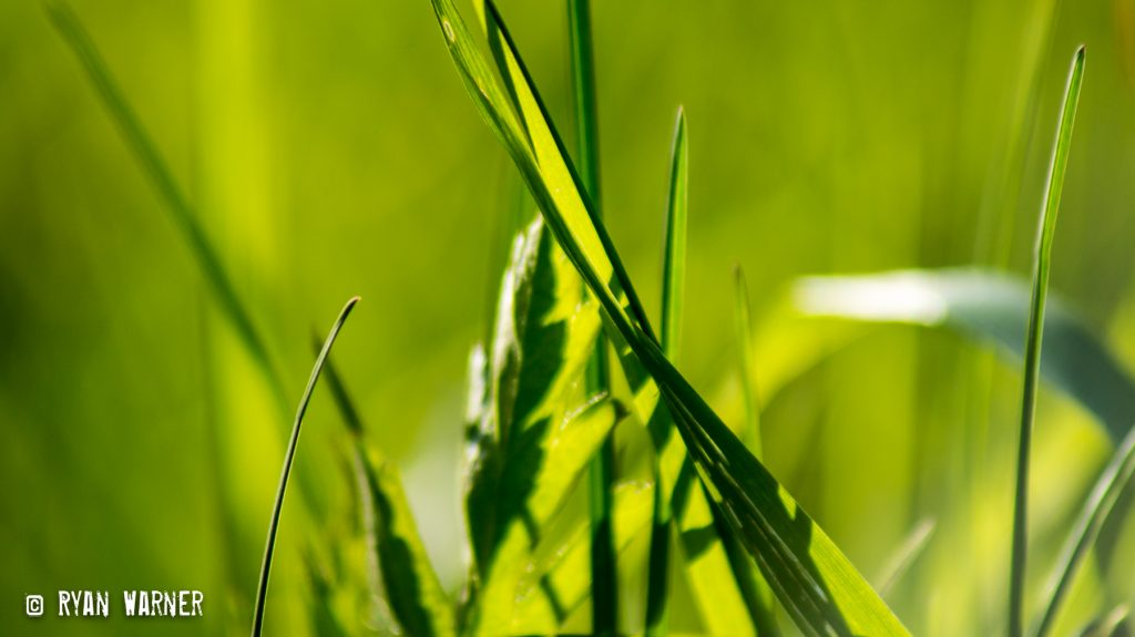 Ryan Warner - Photography - Grass #1 - 2021