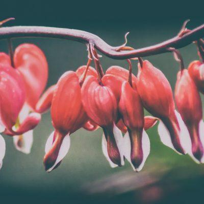 Ryan Warner - Photography - Hearts in a Row