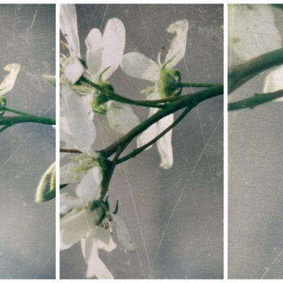 Ryan Warner - Photography - Tree Blossoms - Columbus