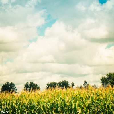 Ryan Warner - Photography - Rows of Corn and Fluffy Clouds